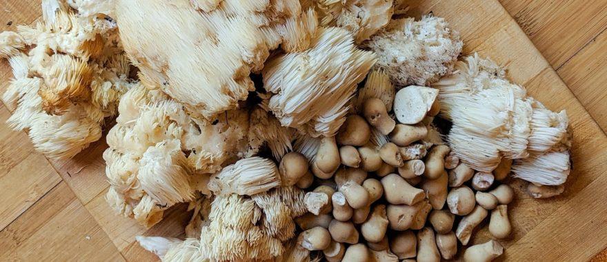 A display of foraged mushrooms
